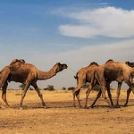 "The Jaisalmer – ""The Golden Town of Rajasthan"" !!"